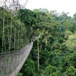Ghana's Kakum National Park Reopens To The Public